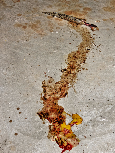 Dead-lizard-3.jpeg