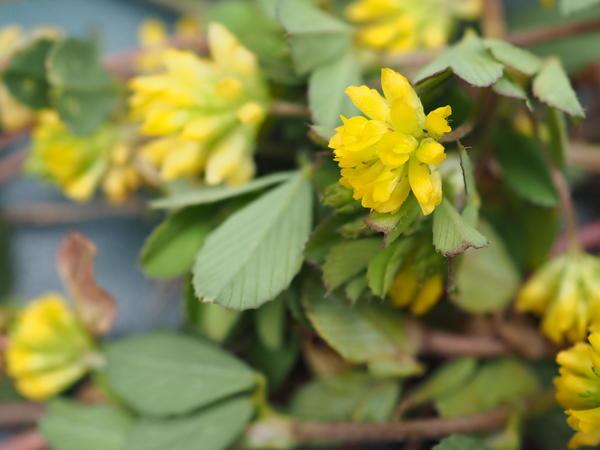 Wildflowers-6-ooc.jpeg
