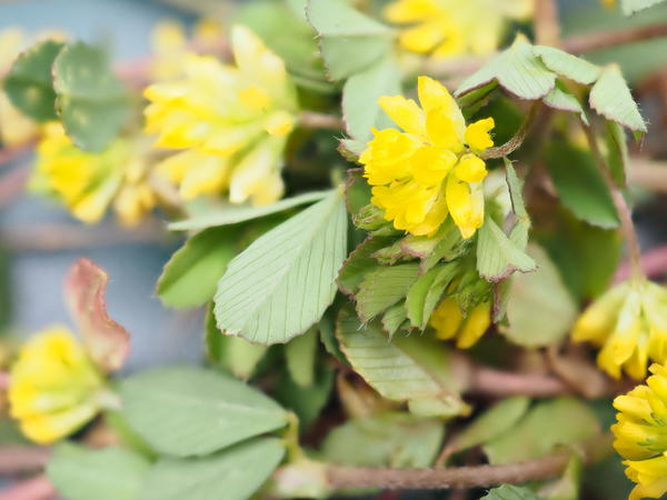 Wildflowers-7-ooc.jpeg
