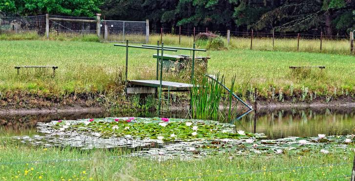 Water-lilies-1.jpeg