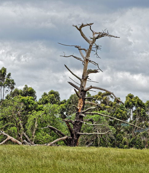 Dead-tree.jpeg
