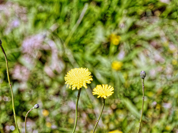 Wildflower-1-5.jpeg