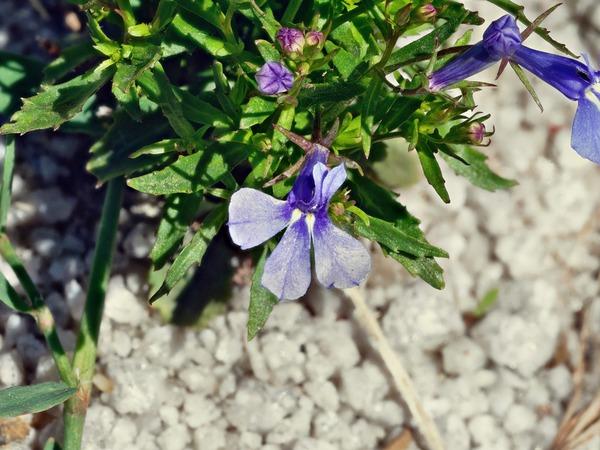 Wildflower-3-3-PMax.jpeg