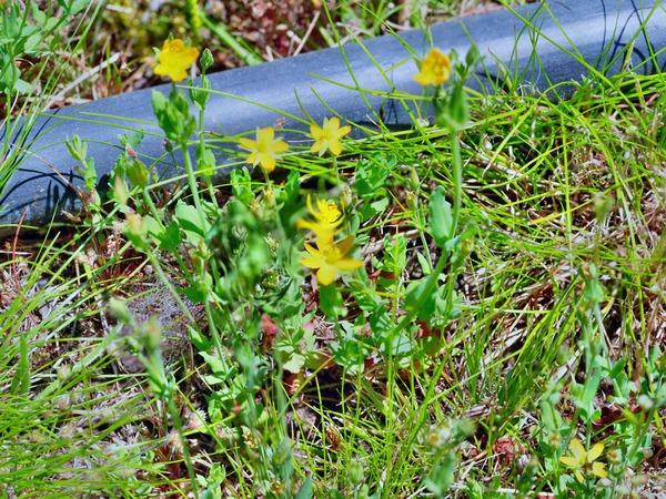 Wildflower-5-2-DMap.jpeg