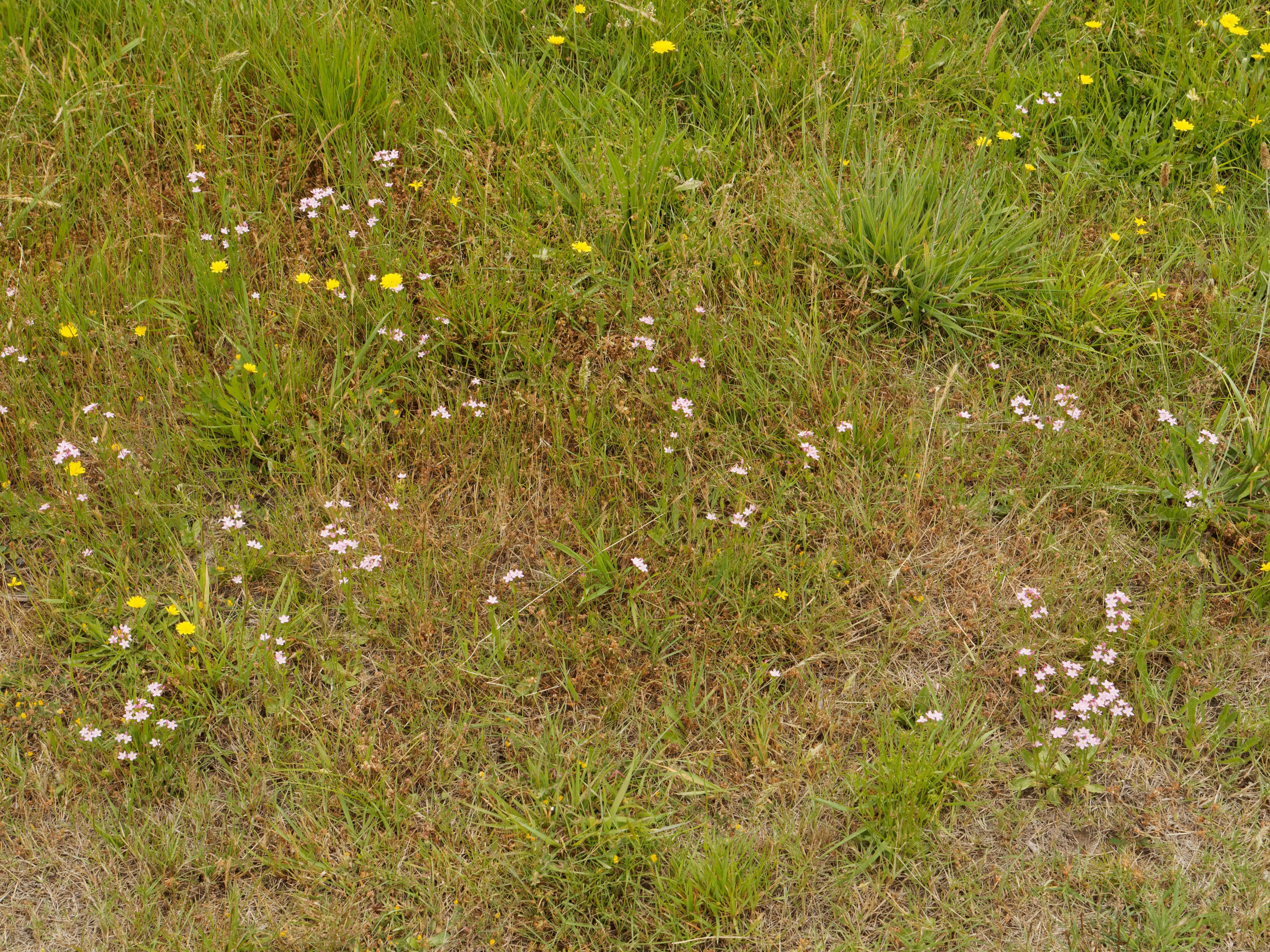 Pink-wildflowers-2.jpeg