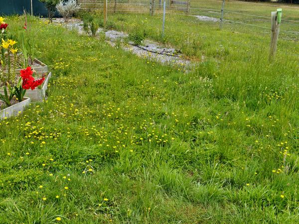 Lawn-1.jpeg