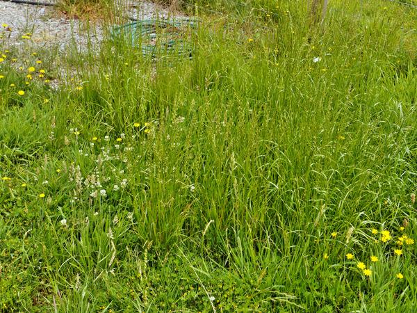 Lawn-3.jpeg