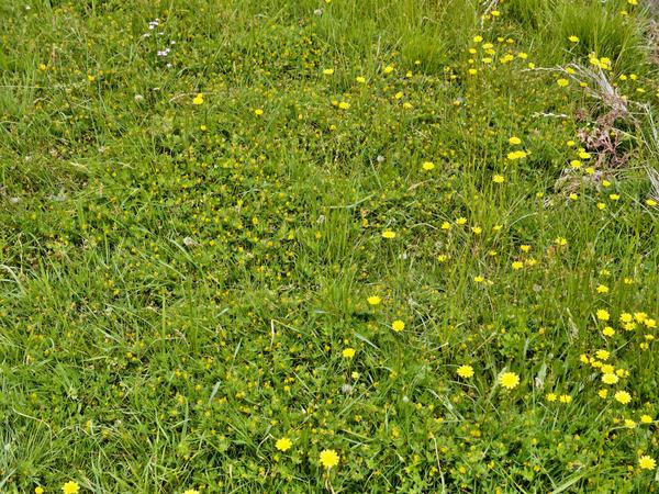 Lawn-4.jpeg