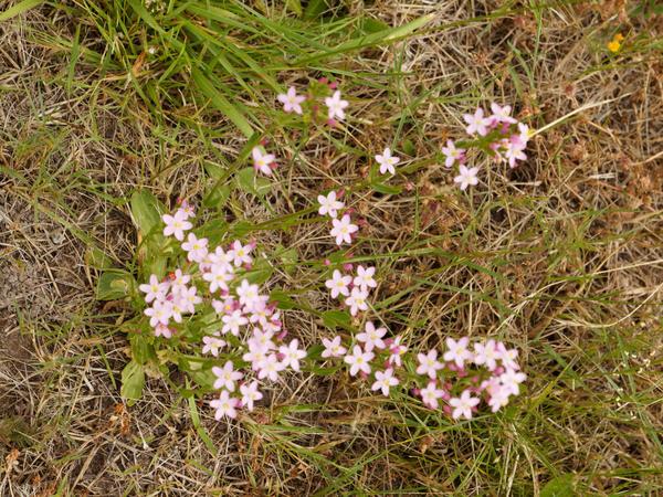 Pink-wildflowers-3.jpeg