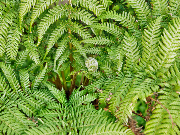 Tree-fern-2.jpeg