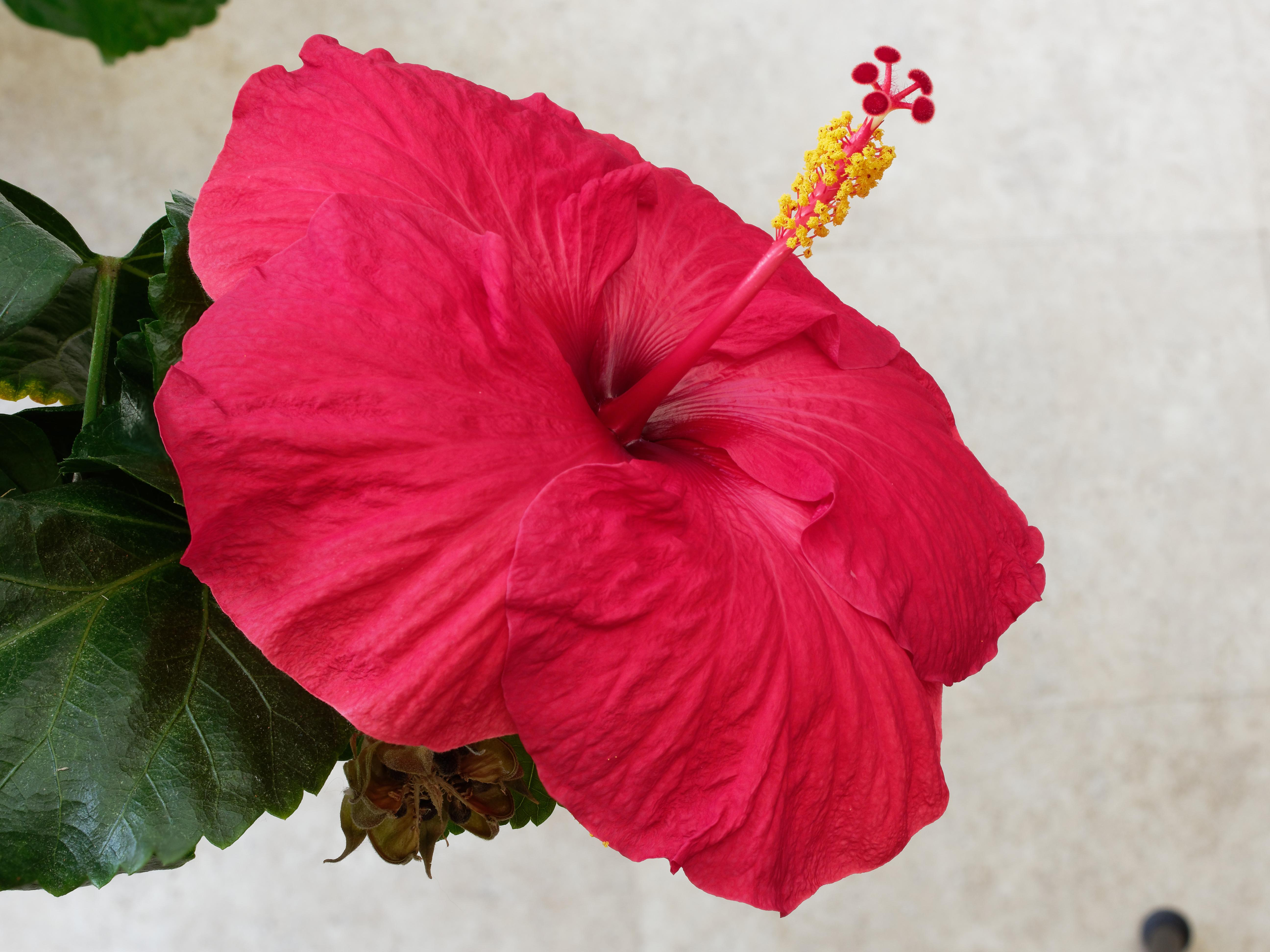 This should be Hibiscus-1-DMap.jpeg.  Is it missing?
