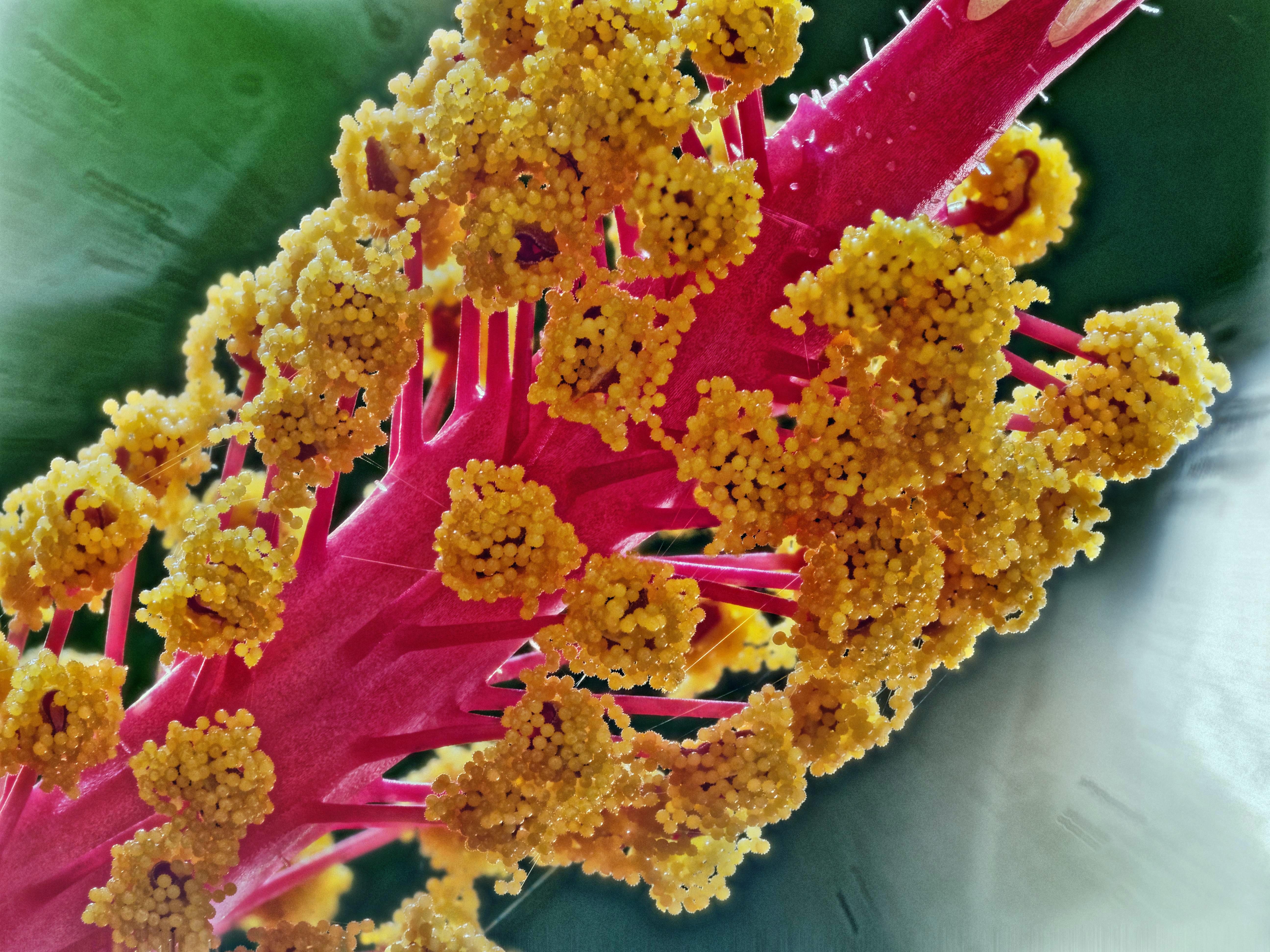 Hibiscus-2-PMax.jpeg