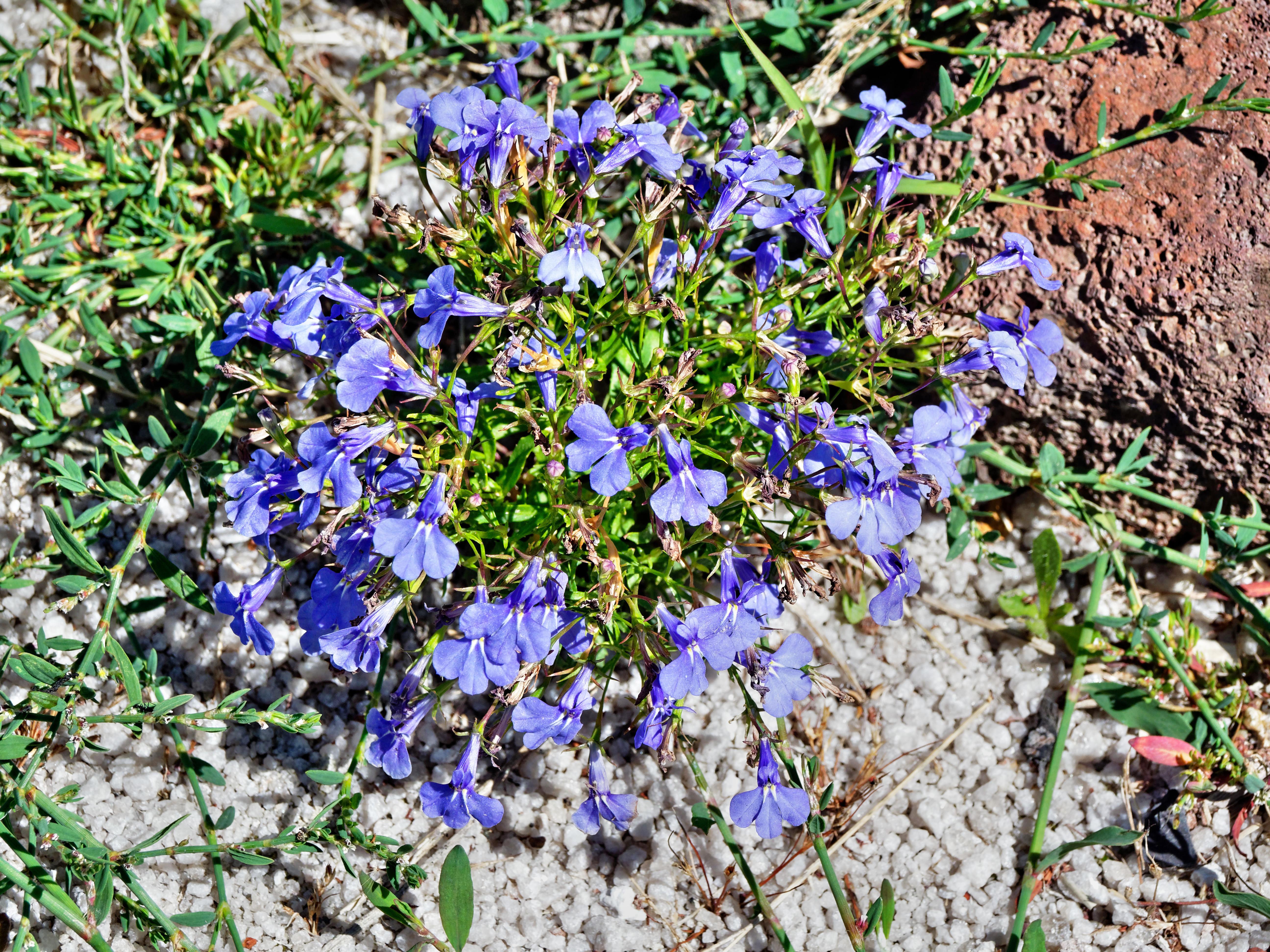 Mystery-flower-1-1.jpeg