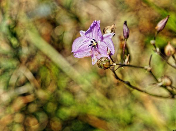 Wildflower-2-1.jpeg