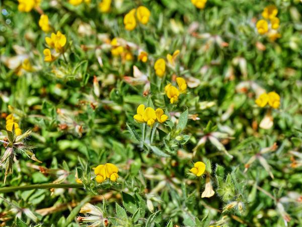 Wildflower-5-2.jpeg