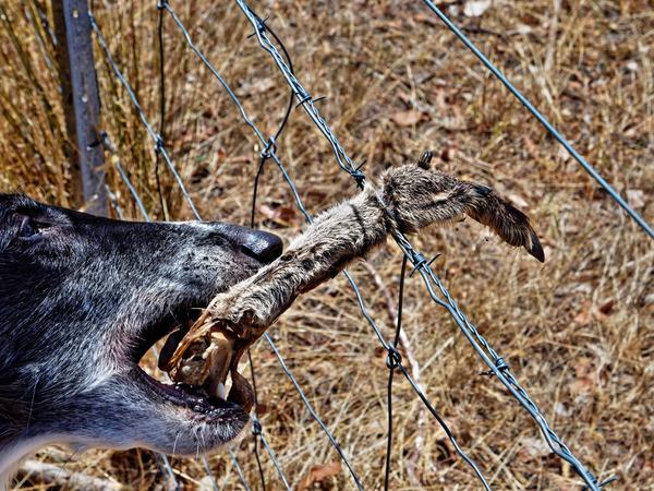 Kangaroo-paw-4.jpeg