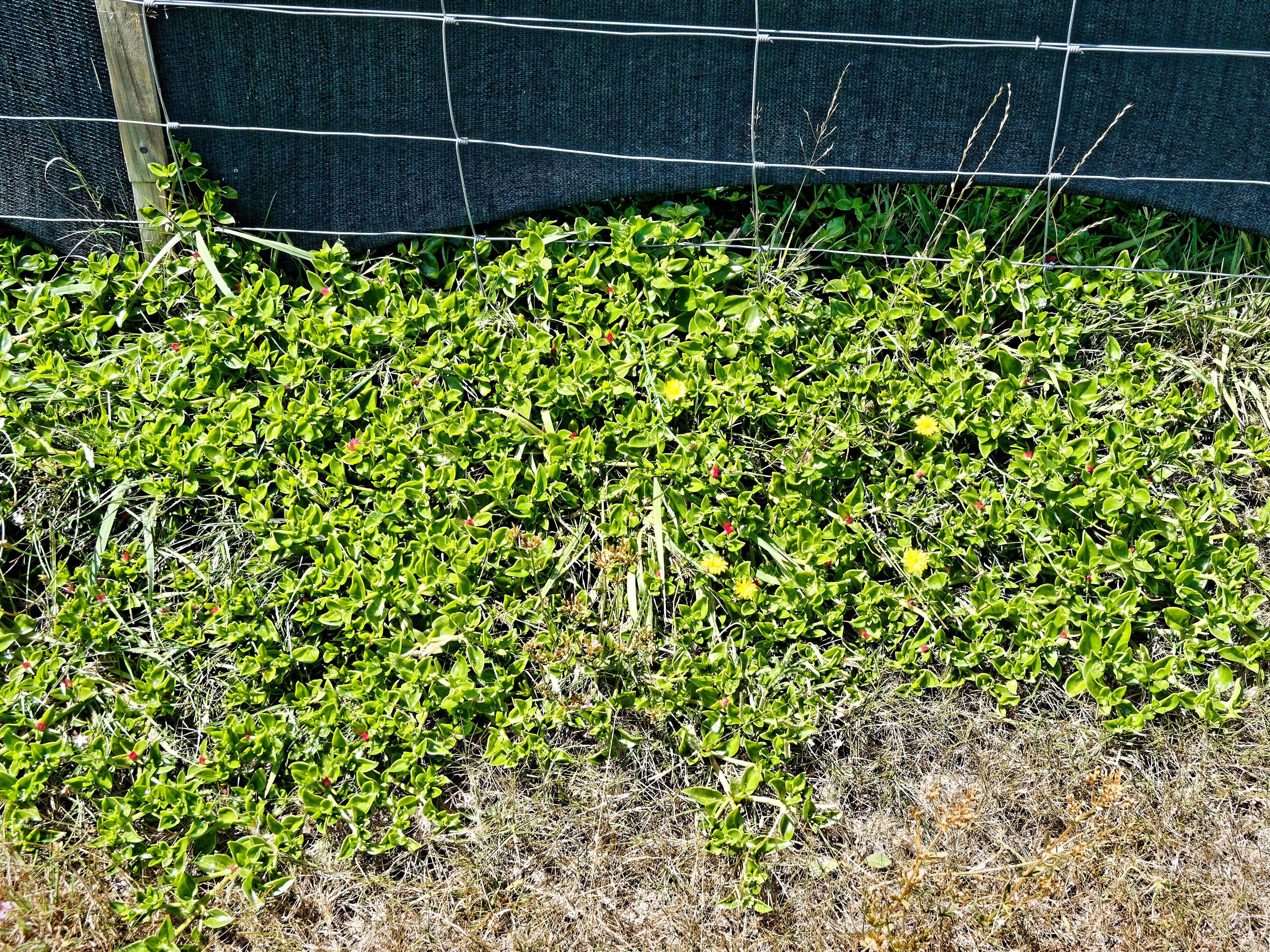 Mystery-plant-1-2.jpeg