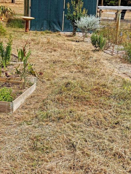 Weeding-garden-3.jpeg