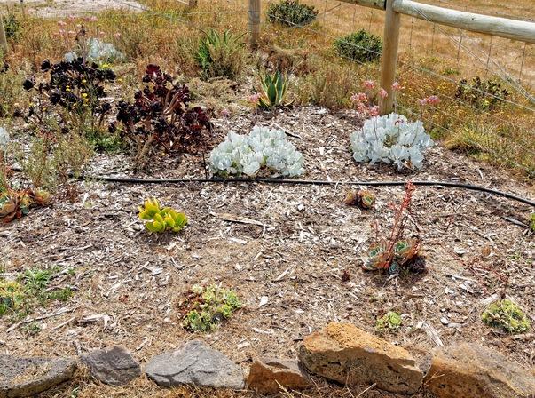 Weeding-garden-4.jpeg
