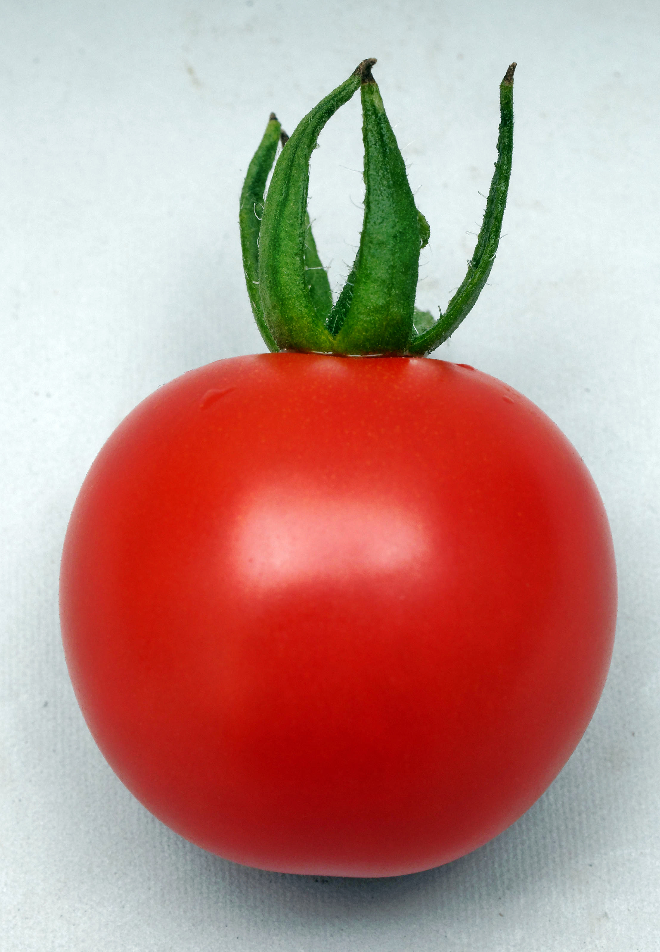 This should be Tomato.jpeg.  Is it missing?