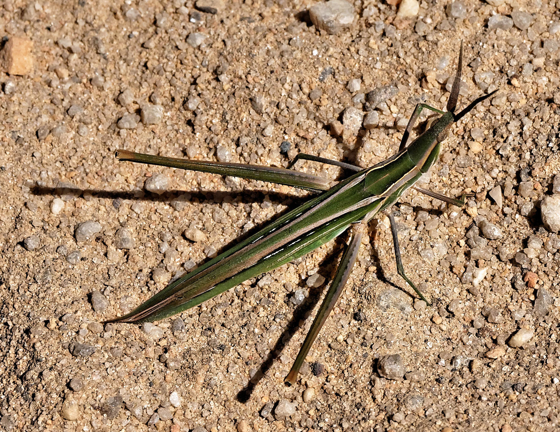 Mantis-1.jpeg