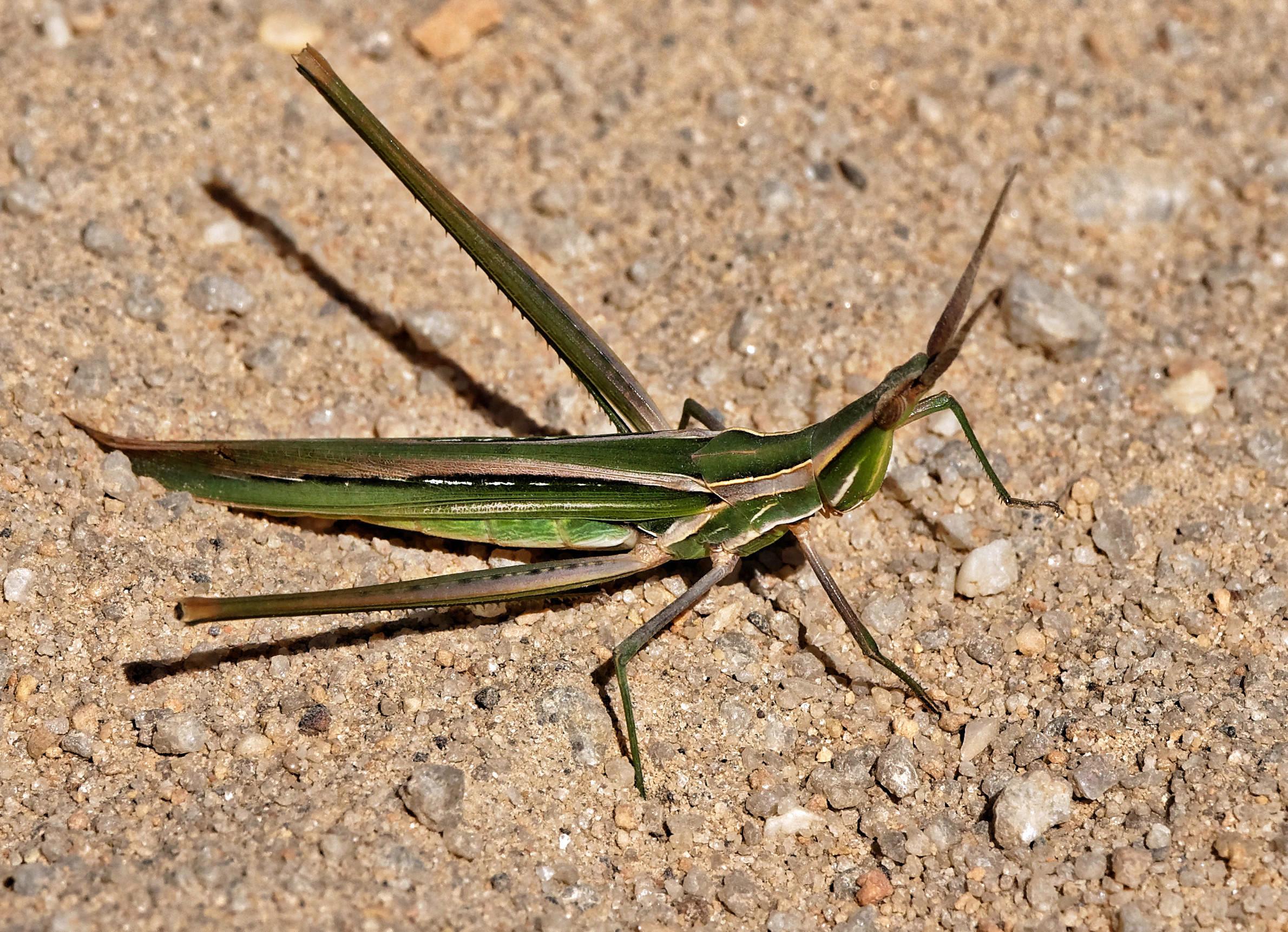 Mantis-3.jpeg