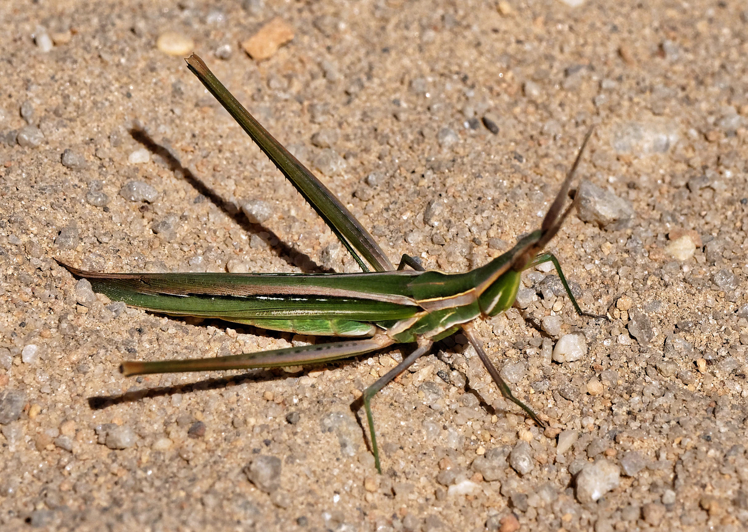Mantis-4.jpeg