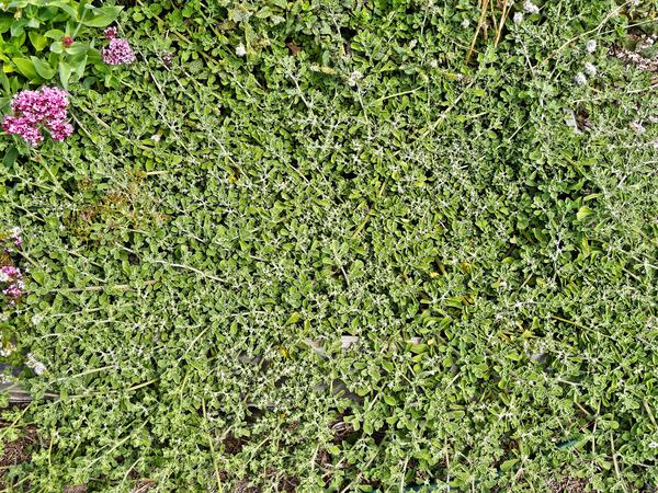 Mystery-plant-3.jpeg