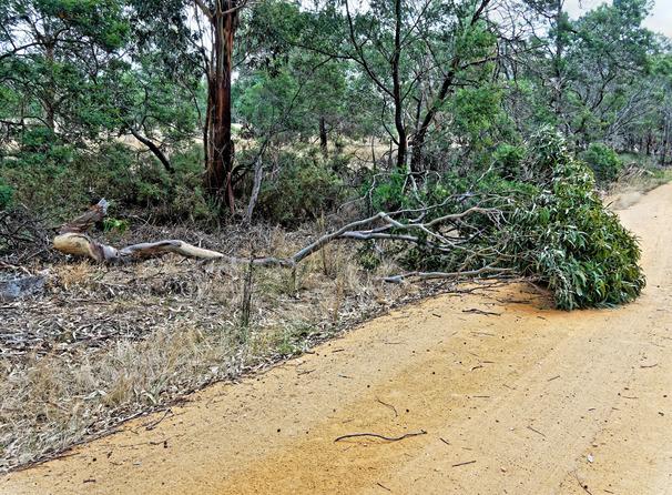 Fallen-tree-3.jpeg
