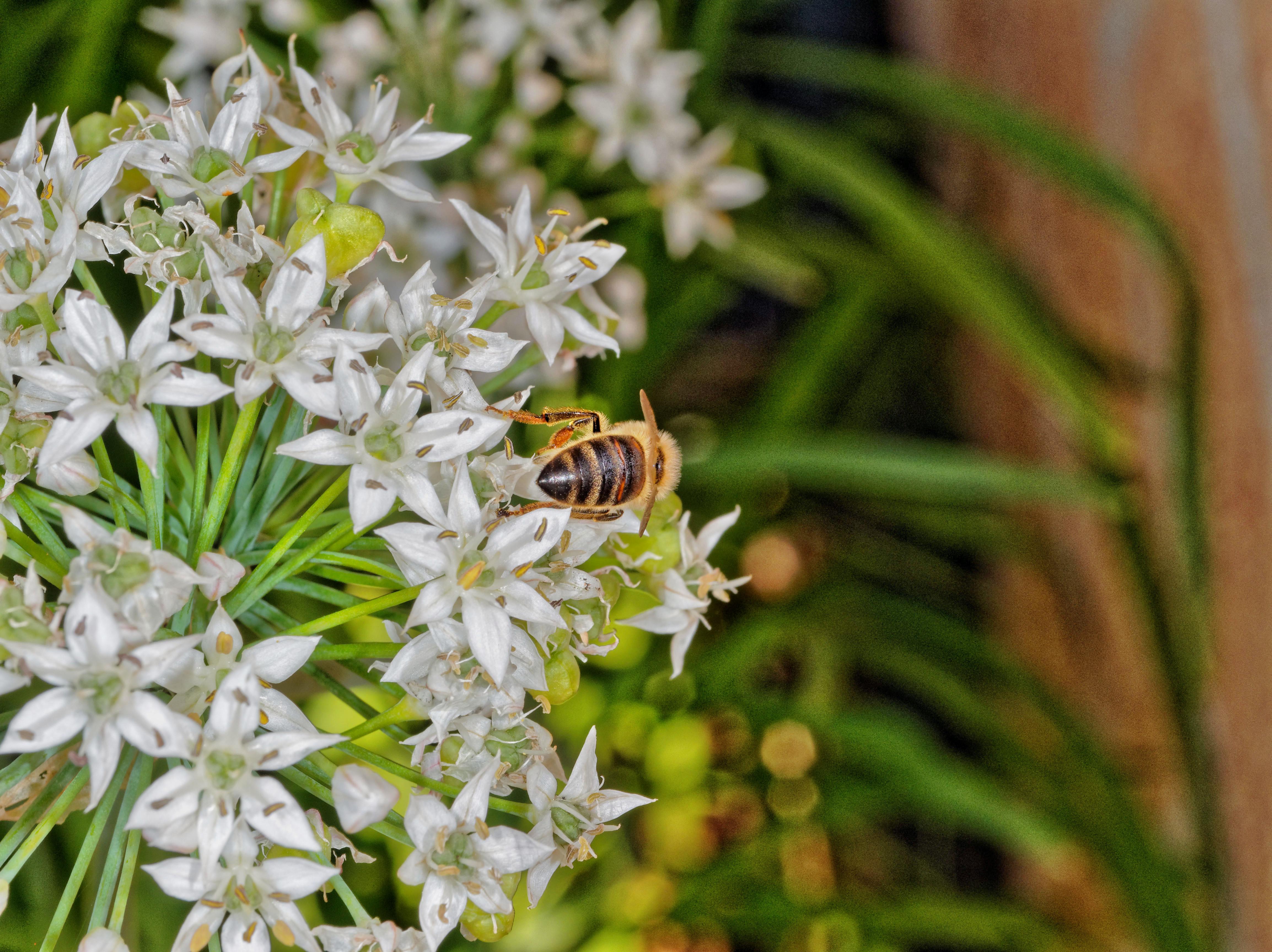 Bees-1.jpeg
