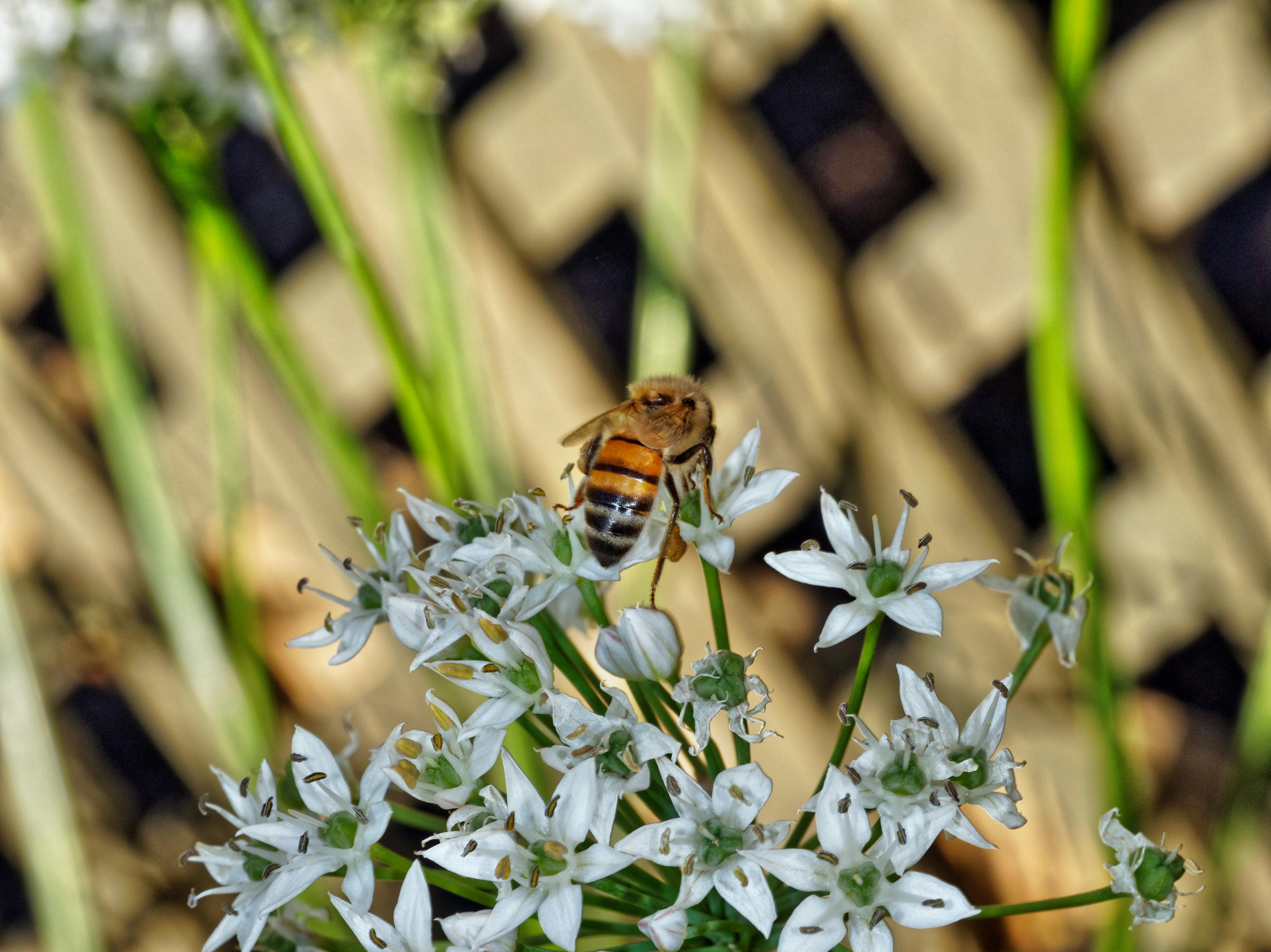 Bees-10.jpeg