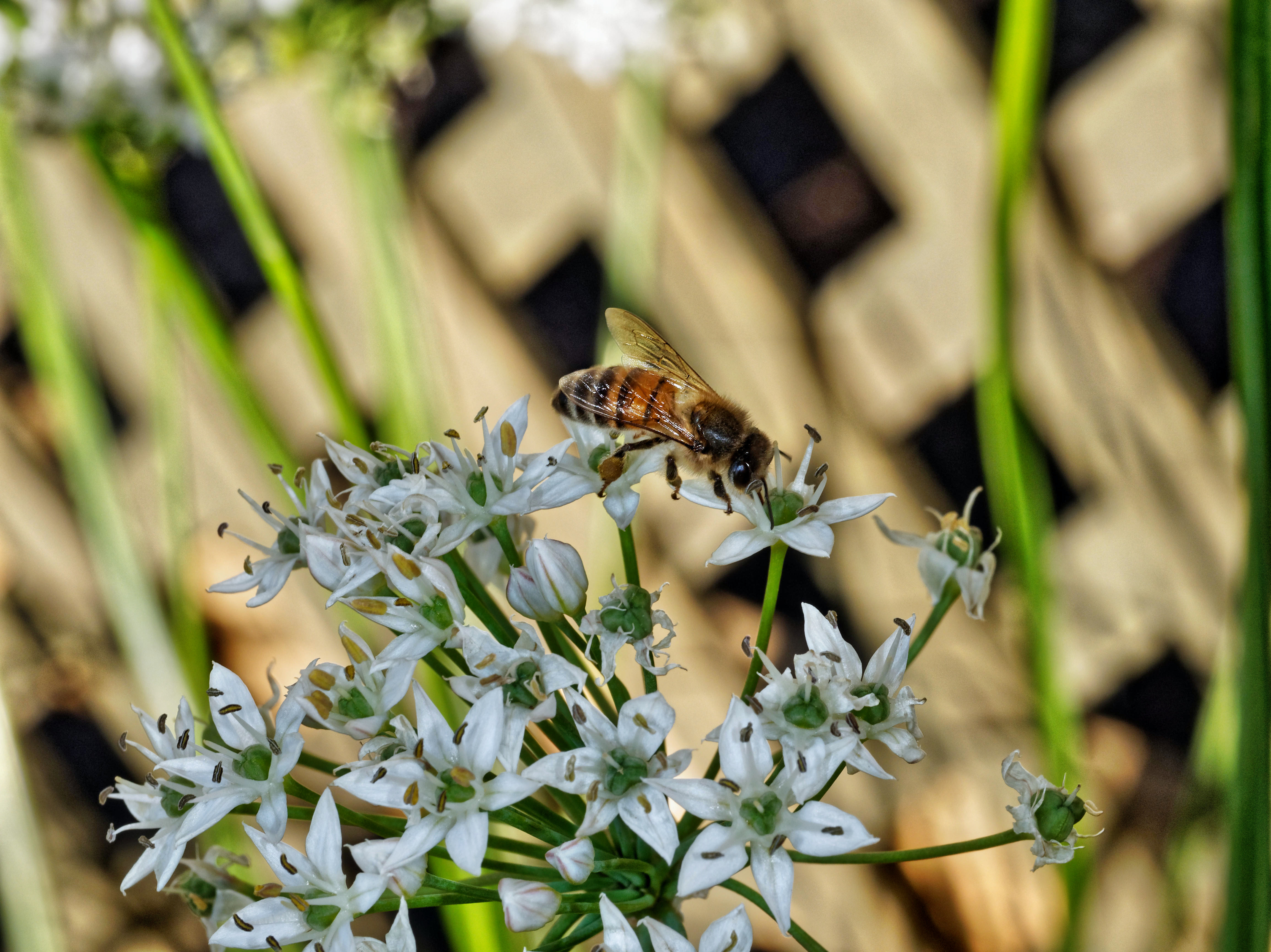 Bees-11.jpeg