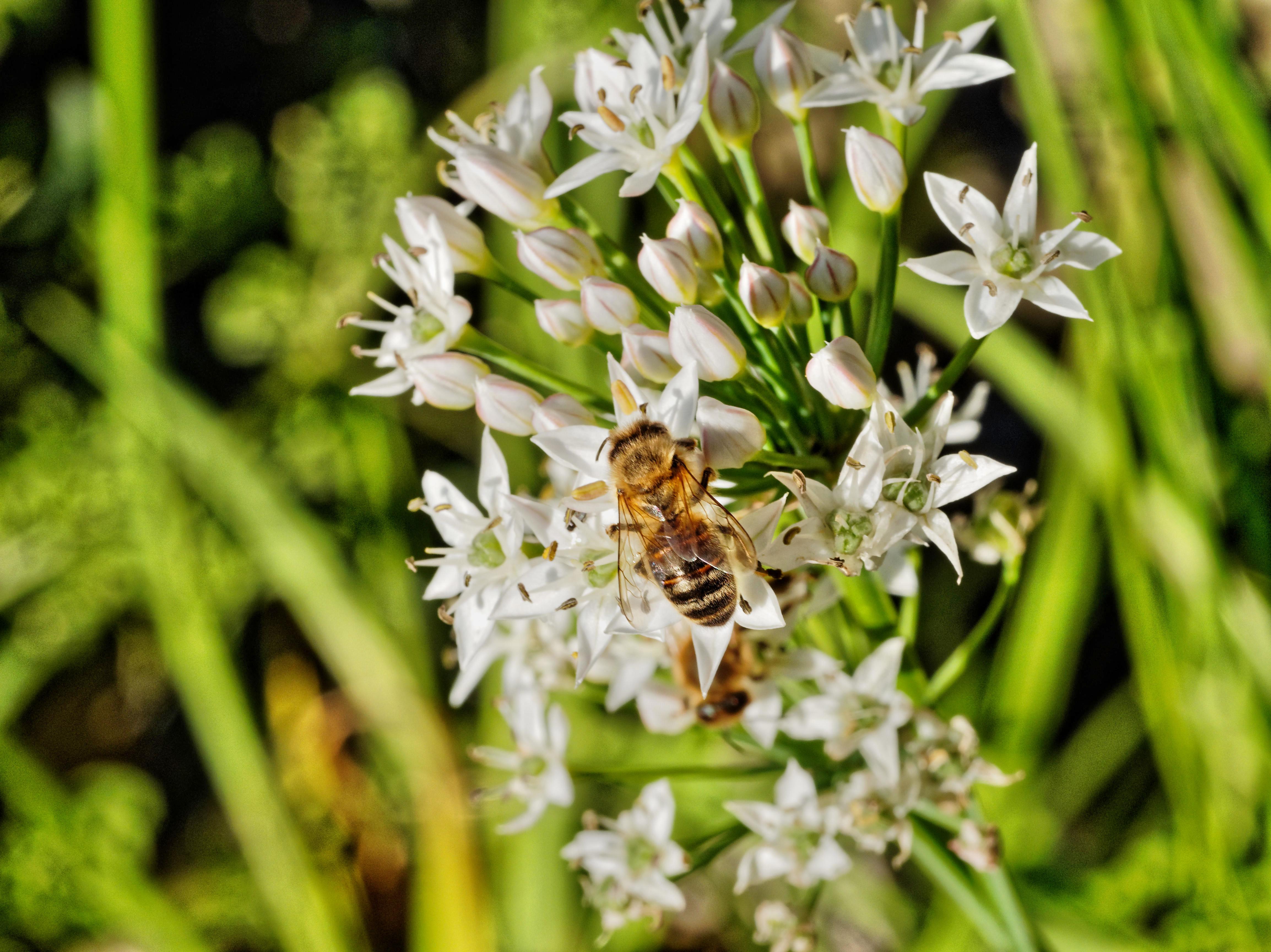 Bees-13.jpeg