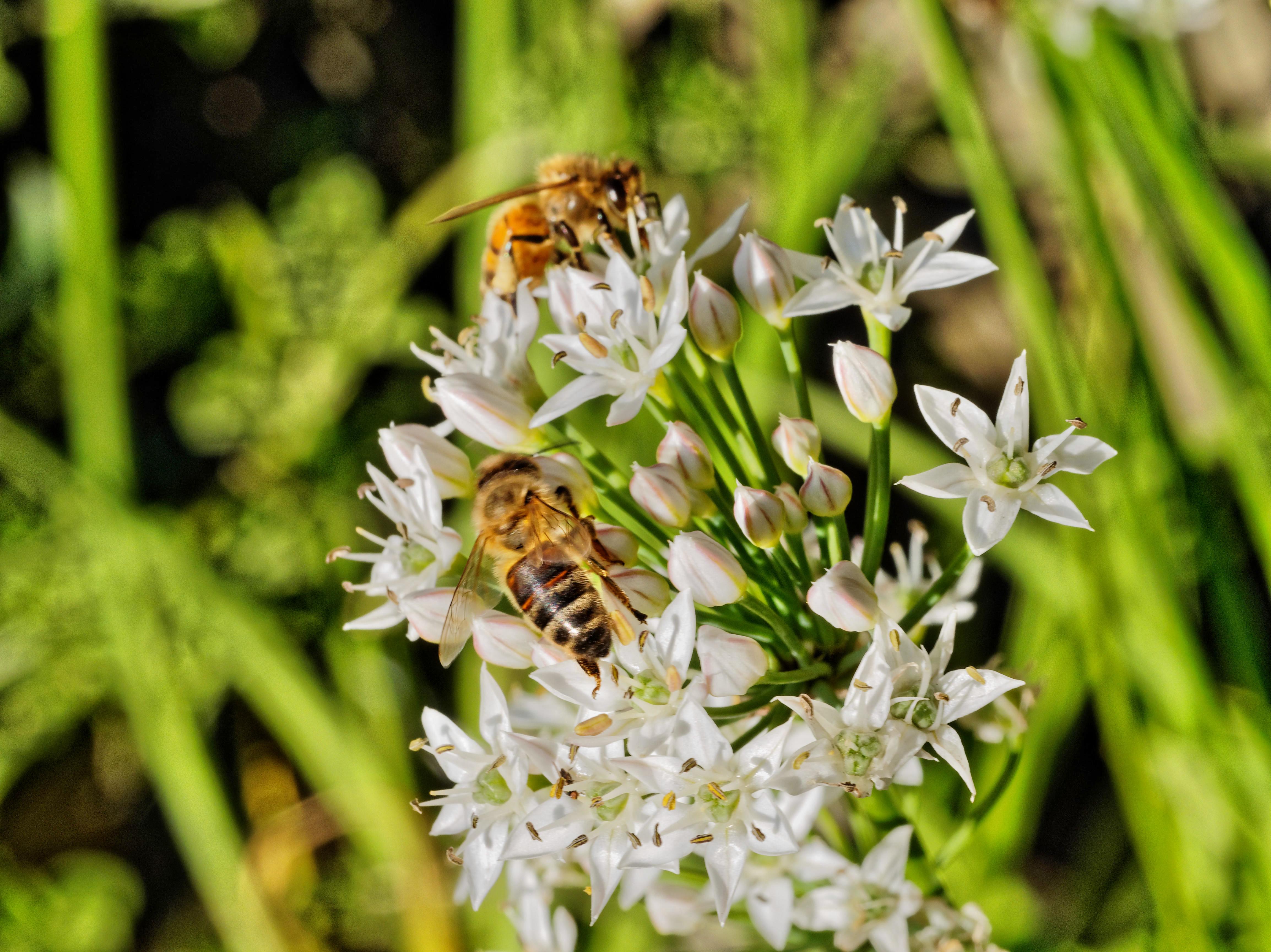 Bees-16.jpeg