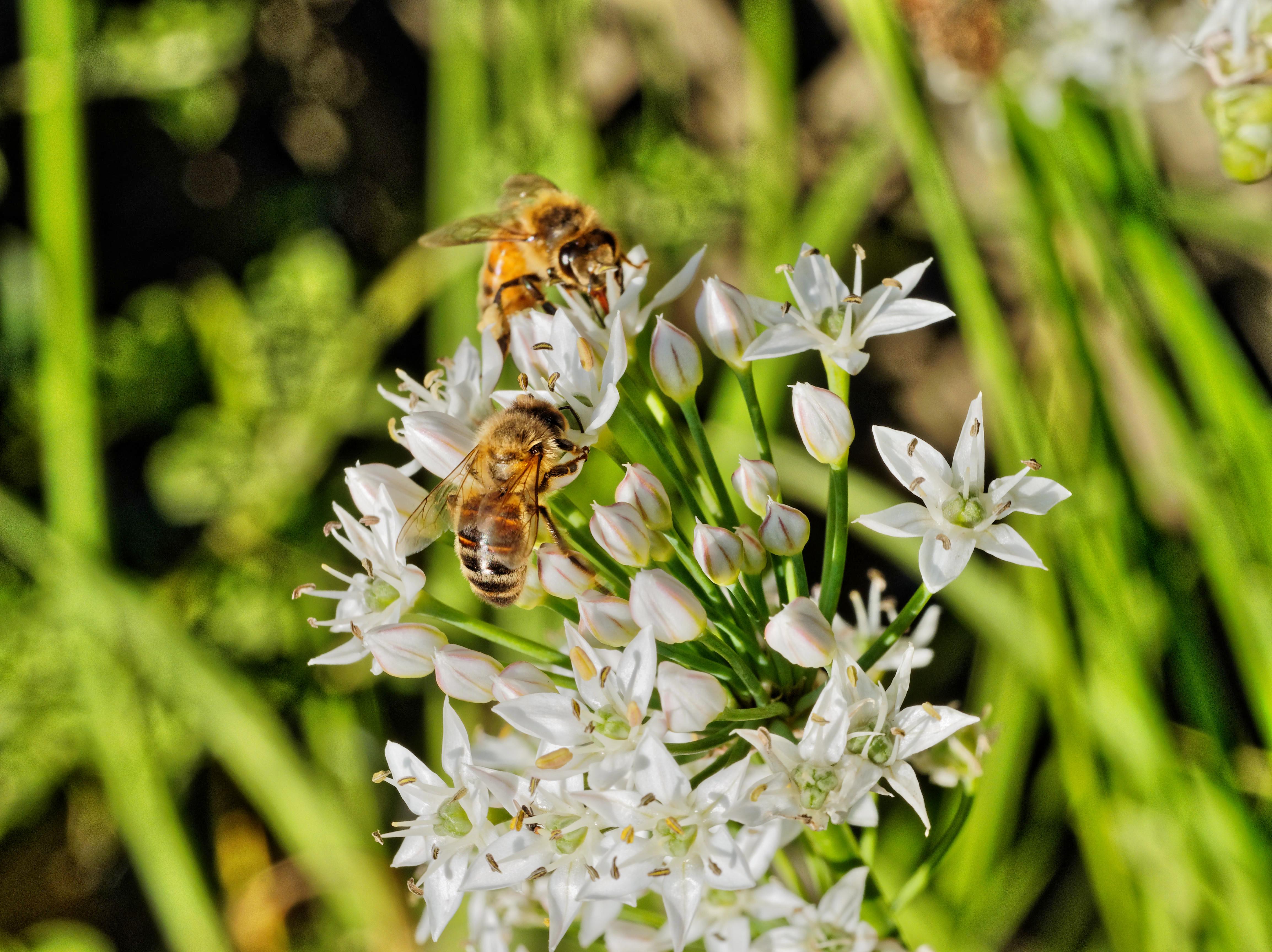 Bees-17.jpeg