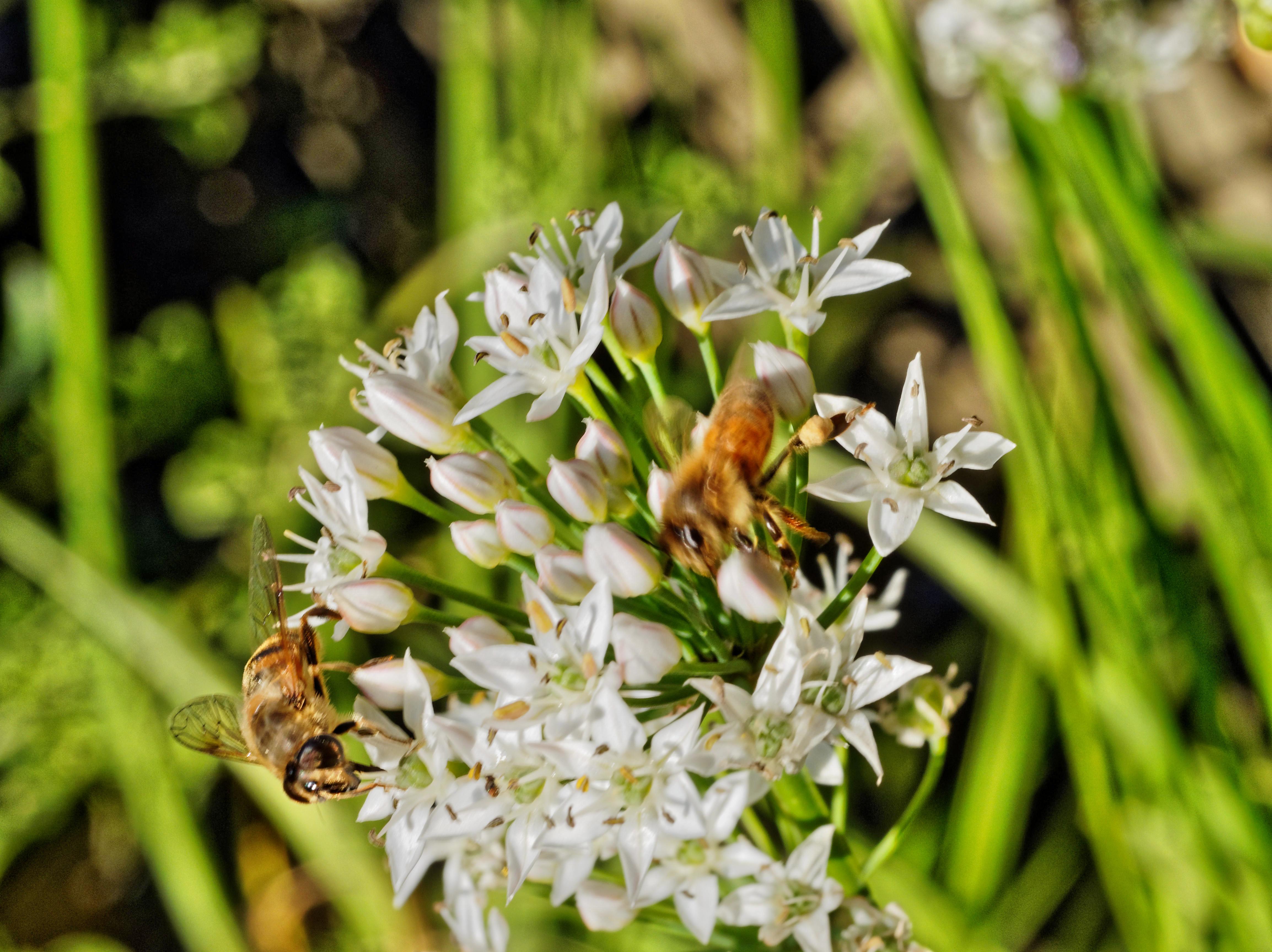 Bees-19.jpeg