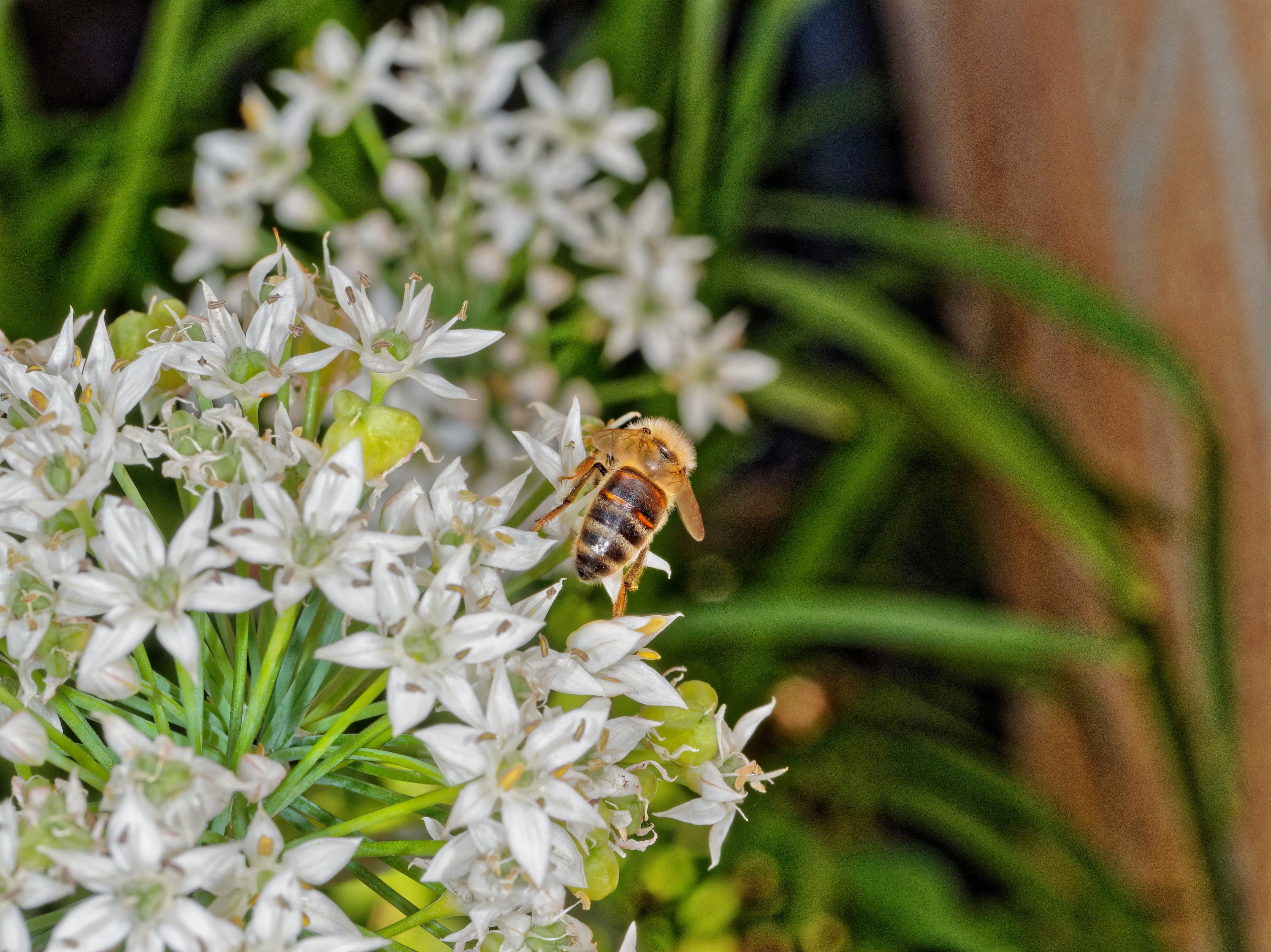 Bees-2.jpeg