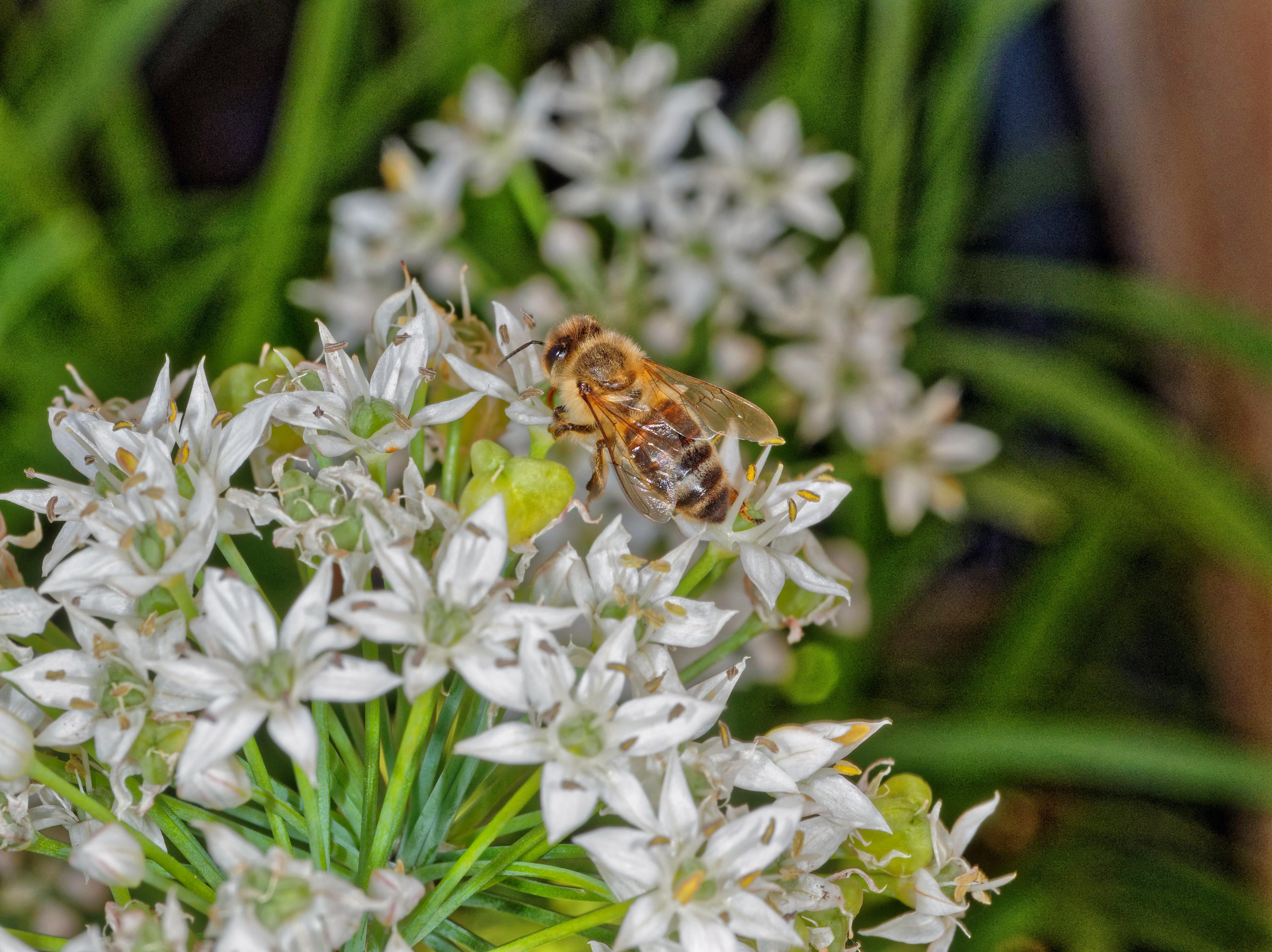 Bees-3.jpeg
