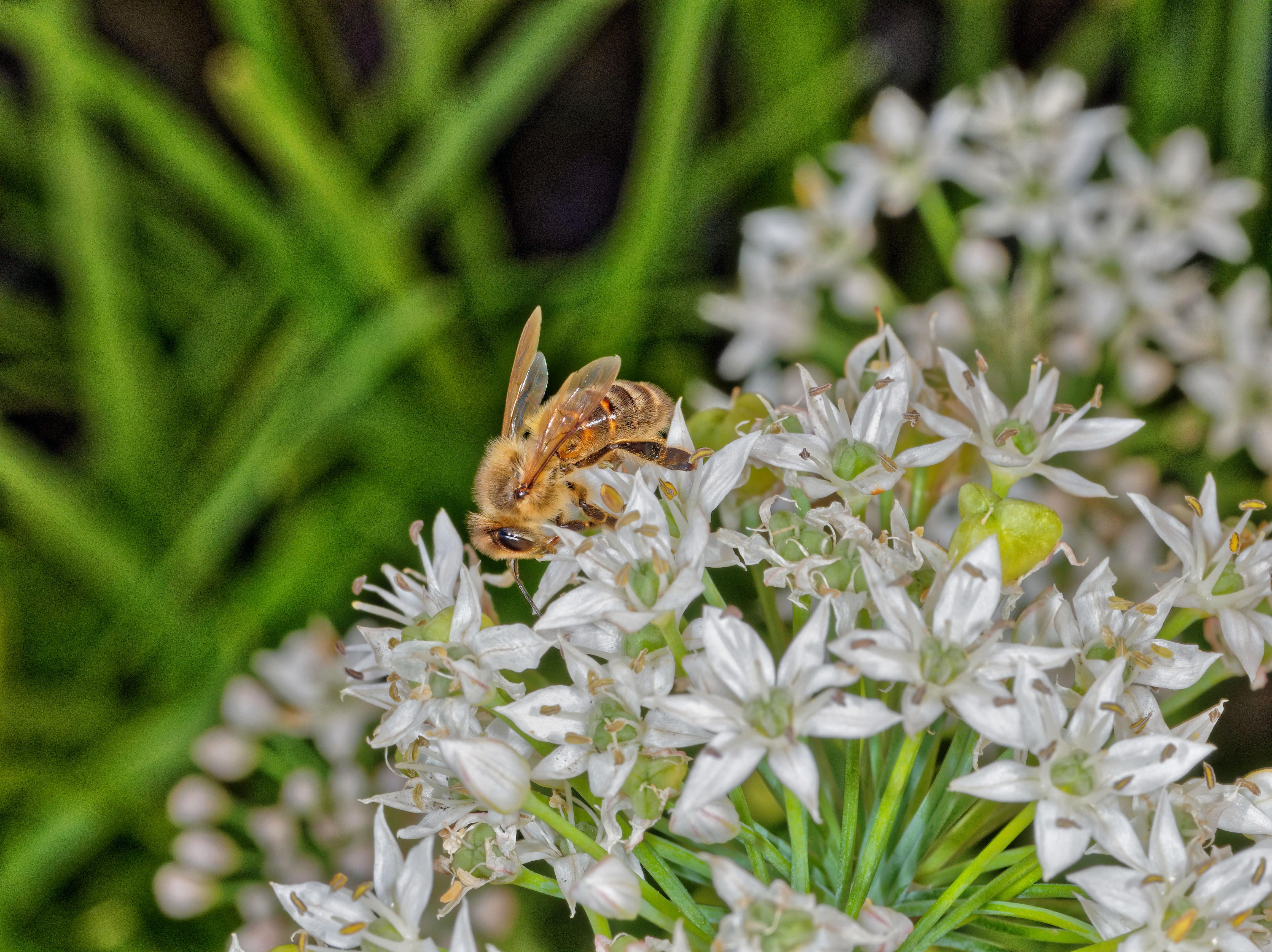 Bees-5.jpeg