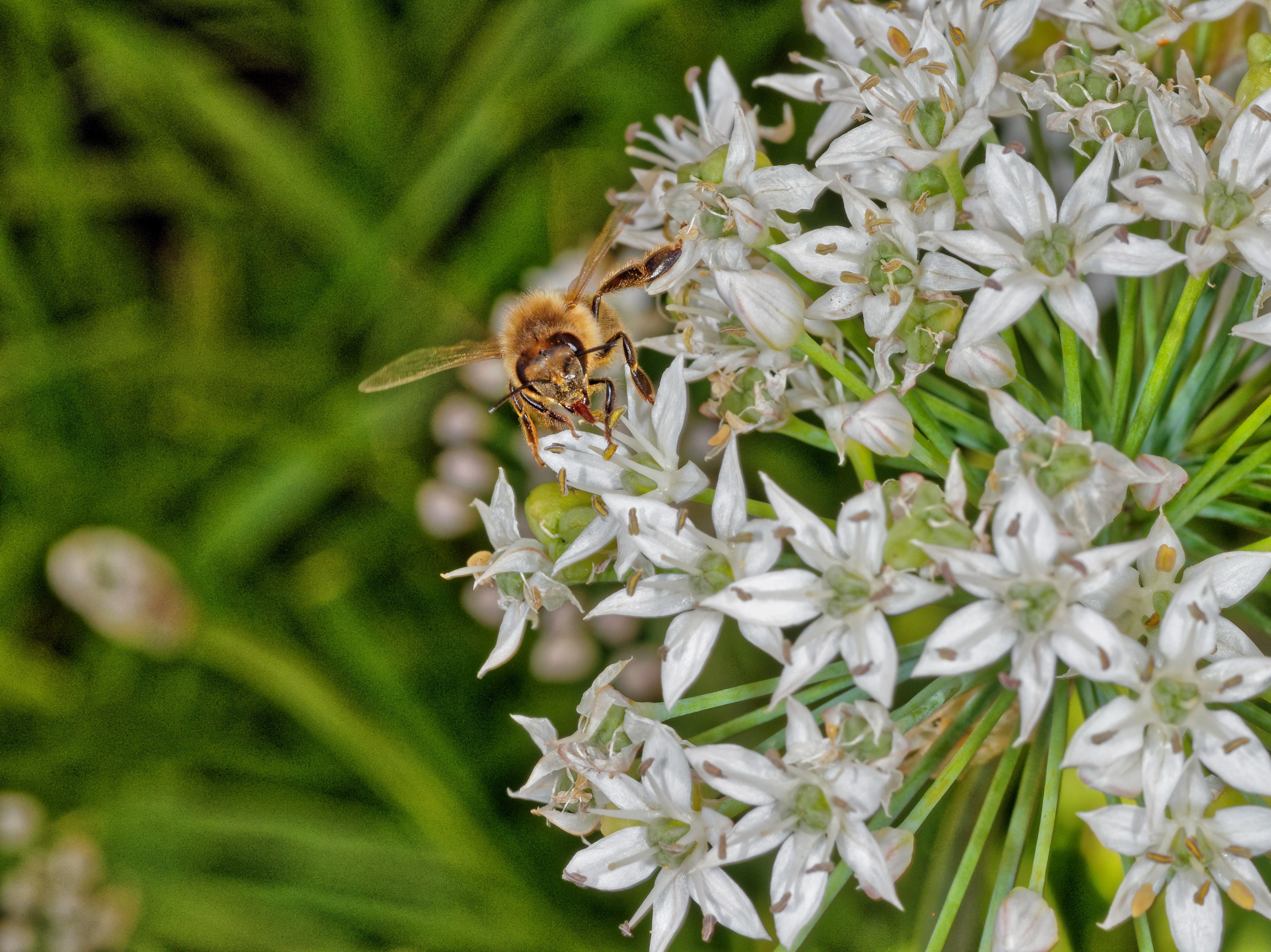 Bees-6.jpeg