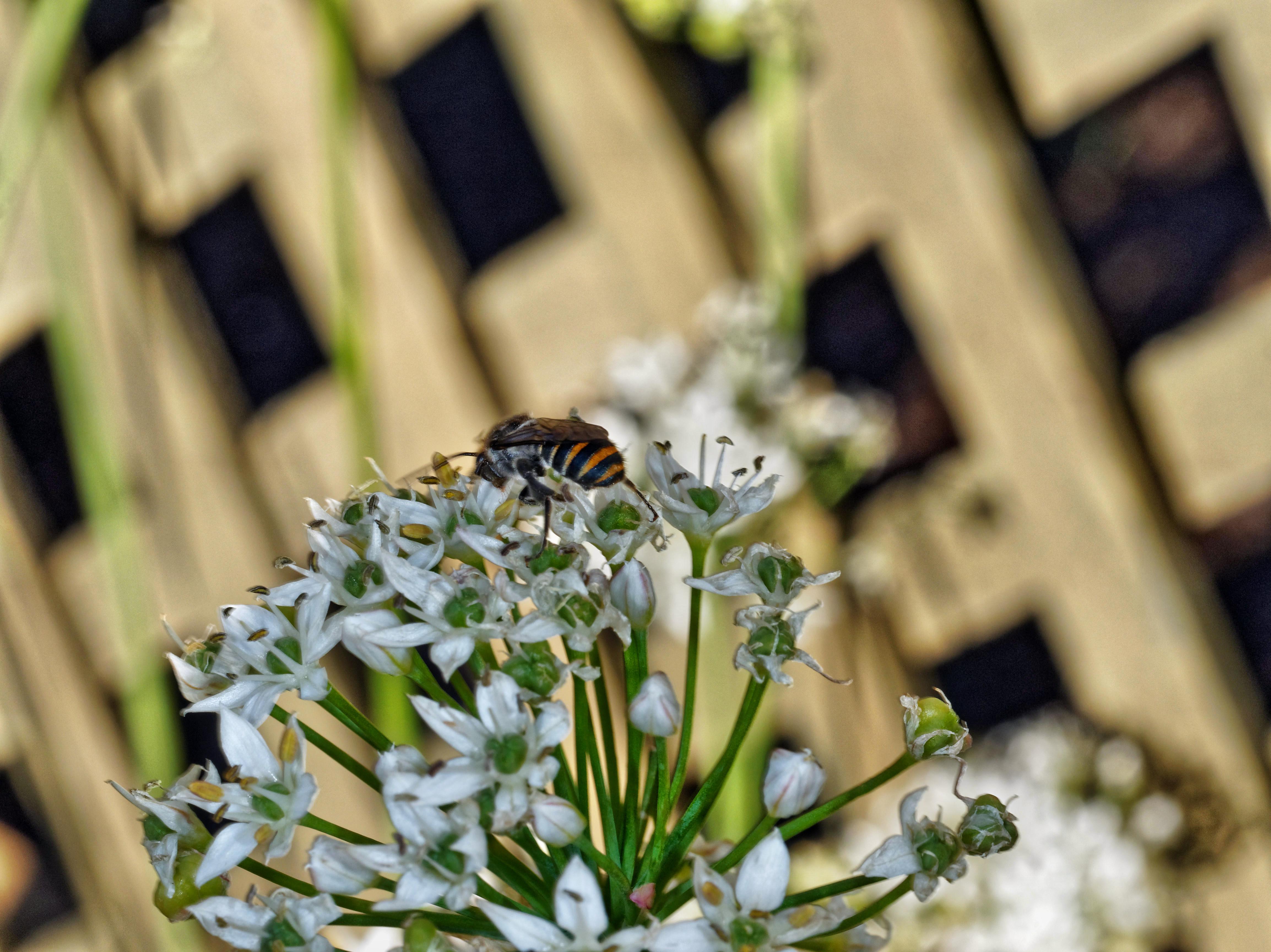 Bees-8.jpeg