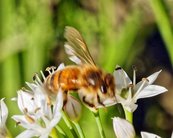 Bees-18-detail.jpeg