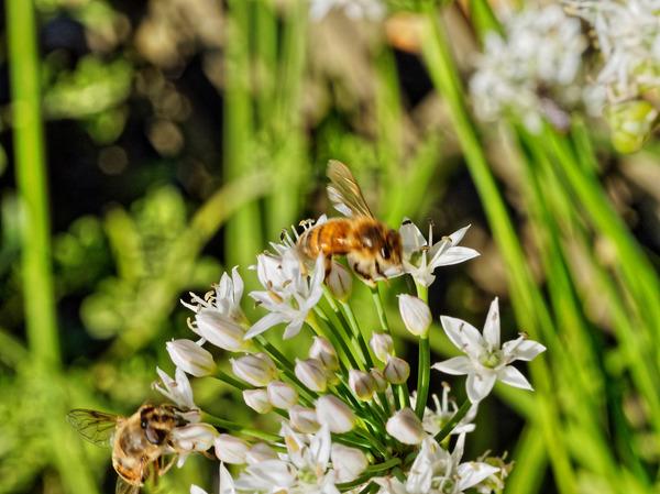 Bees-18.jpeg