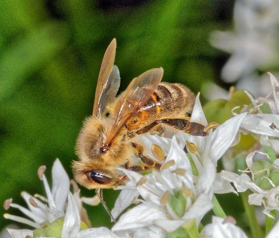 Bees-5-detail.jpeg
