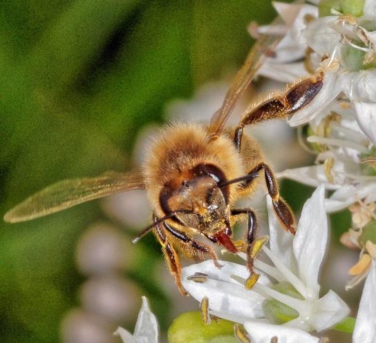 Bees-6-detail.jpeg