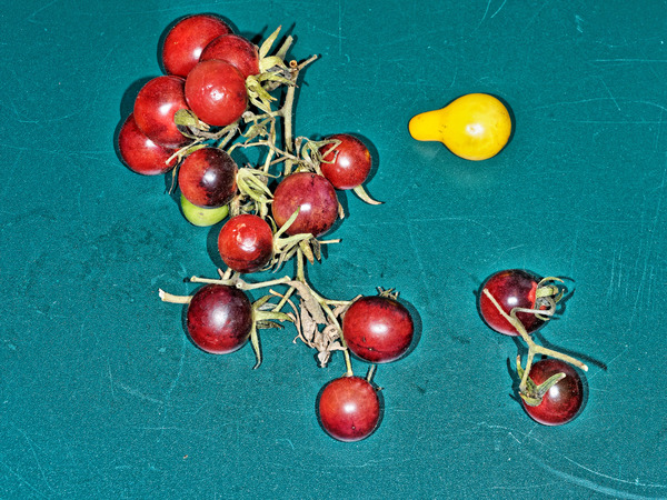 Cherries-1.jpeg