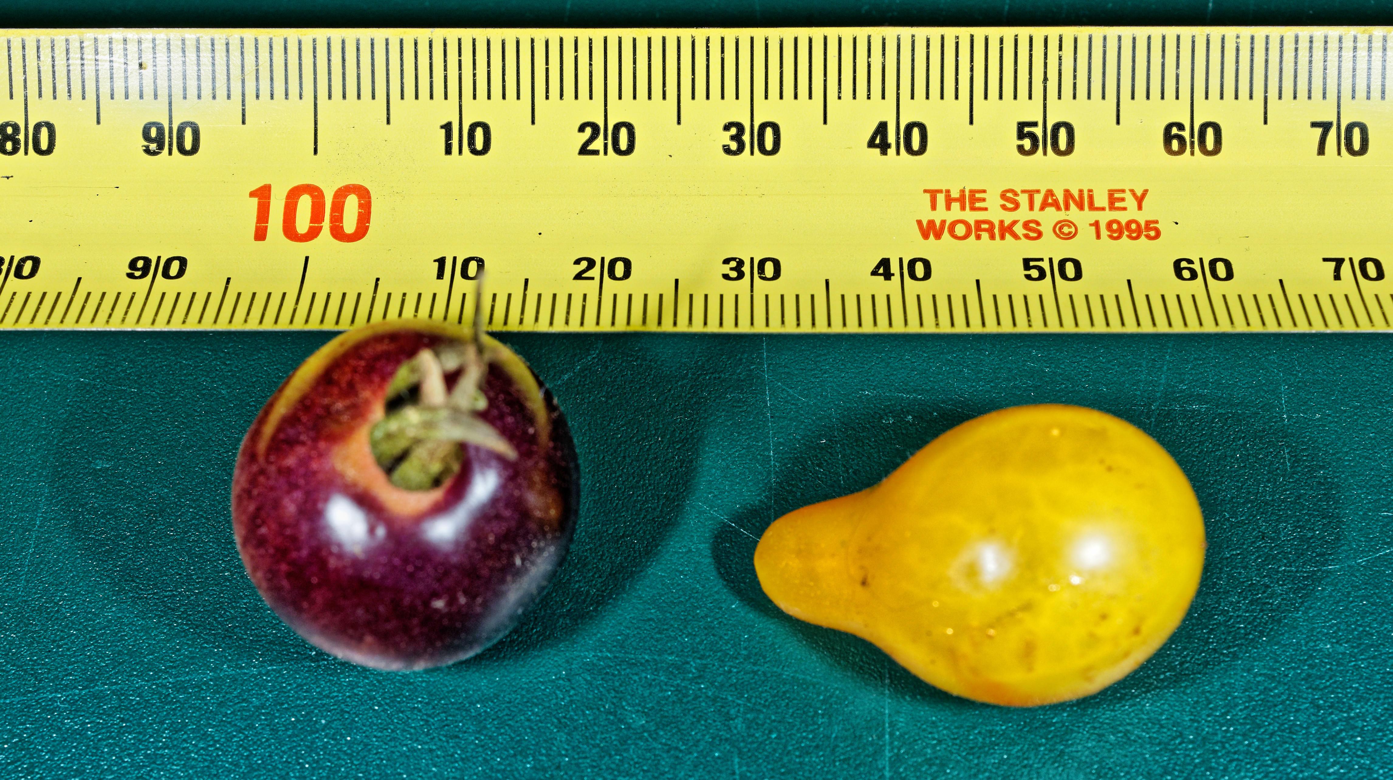 Tomatoes-4.jpeg