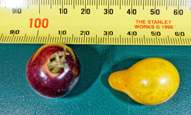 Tomatoes-5.jpeg