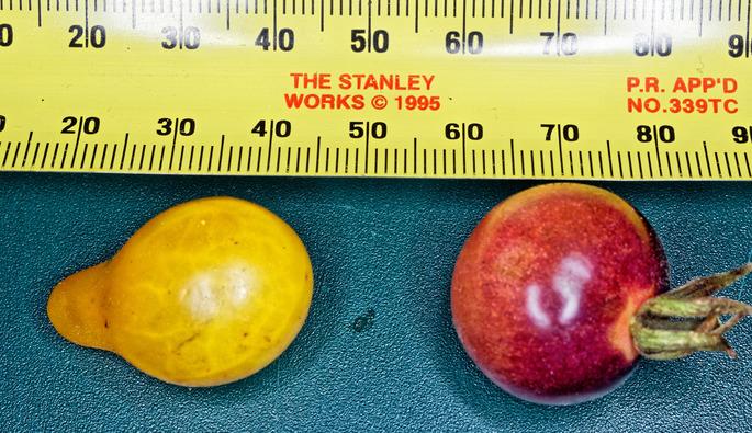 Tomatoes-6.jpeg