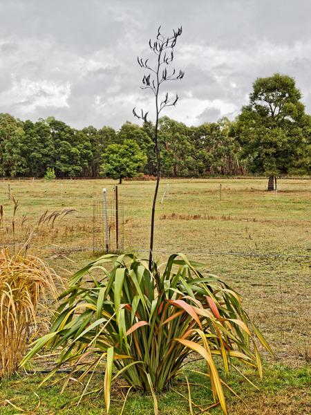 Grass-flower-2.jpeg